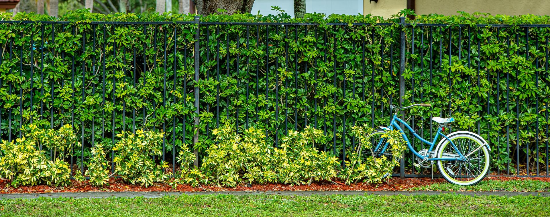 Vyberte ten správný plot