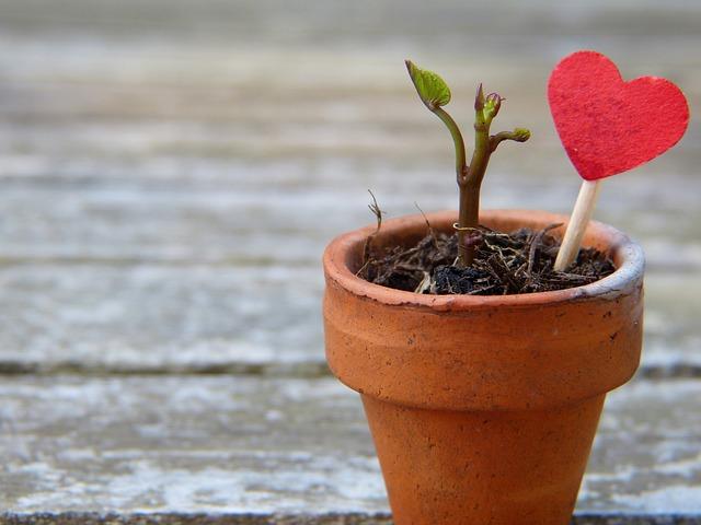 srdce v květináči.jpg