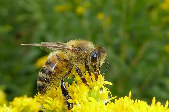 včela od pylu